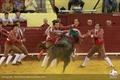 Fotos da corrida do Campo pequeno - Confronto de Dinastias