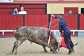 Imagens do Festival Taurino dos 80 Anos dos Forcados Amadores de Vila Franca