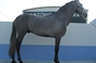 A quadra de cavalos de Francisco Parreira