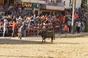 Imagens dos Festejos Populares Taurinos - Samora Correia
