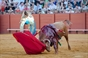 As imagens da novilhada em Sevilha