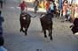 Imagens dos Festejos populares do Samouco