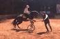 Brito Paes no México a ensinar equitação