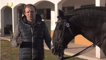 Destaque Campo Pequeno TV : ENSINO DO CAVALO DE TOUREIO