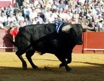 Ganadarias Portuguesas em Espanha