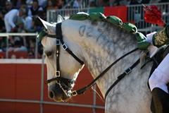 """III Espectáculo """"Cavalo, Orgulho Moitense"""""""