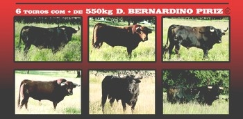 Imagens dos Toiros de D. Bernardino Piriz para a Águeda