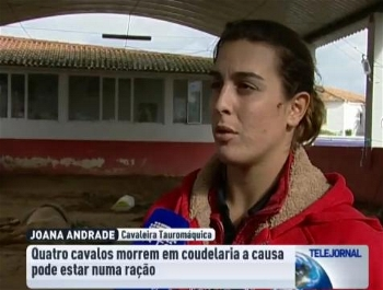 Reportagem RTP Sobre a Morte dos Cavalos de Joana Andrade