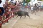 Imagens dos Festejos Populares em Salvaterra de Magos