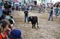 Imagens dos Festejos Populares Taurinos  de Benavente