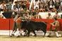 Imagens da 3ª Corrida das Festas do Barrete Verde em Alcochete