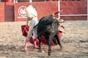 Imagens da novilhada de dia 24 em Valle de las Casas del Tajo (Espanha)
