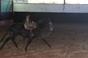 A quadra de cavalos de Francisco Cortes para a temporada 2014