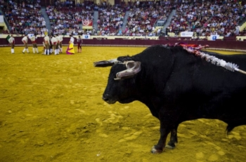 Comité da ONU quer limitar paticipação de crianças portuguesas em touradas
