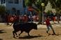 Imagens dos Festejo Populares Taurinos da Moita