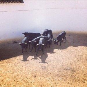Huelva - Sérgio Nunes ovacionado e 5 orelhas dos exemplares Cochicho