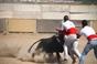 As imagens do treino do Grupo de Forcados Amadores do Cartaxo